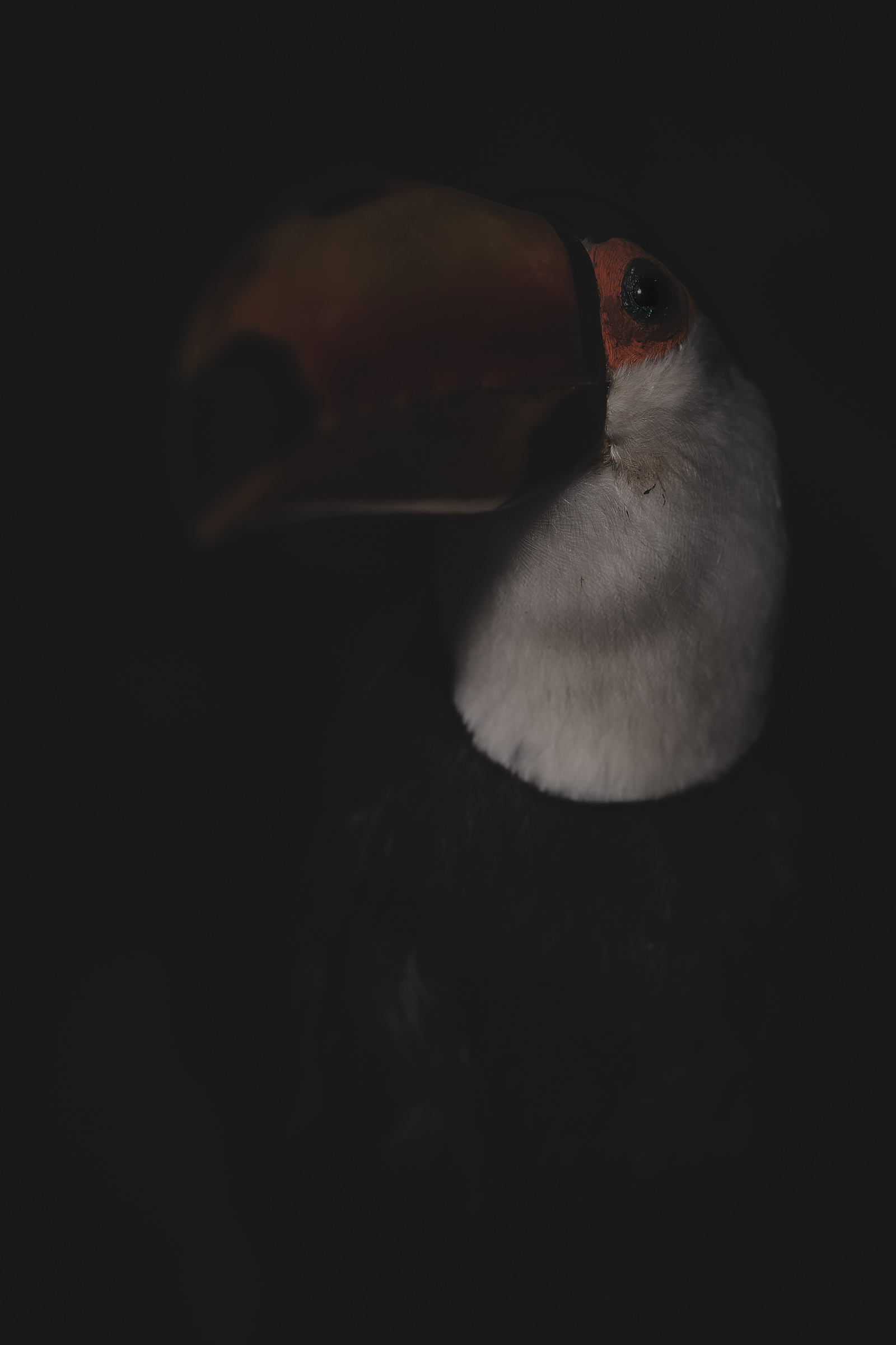 Anima, No. 9 - The Toucan